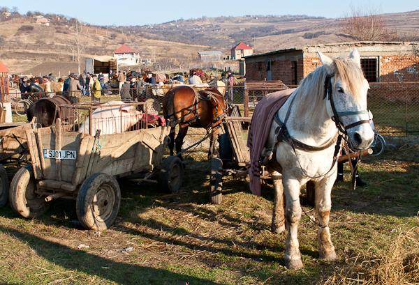 Dobytci trh Sarmasag